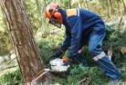 Adelaide Plains Tree felling services 21