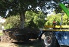 Adelaide Plains Tree felling services 4